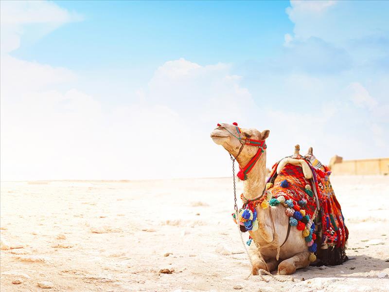 Büyük Fas ve Sahra Çölü Kurban Bayram Özel